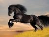 schwarze_pferd1